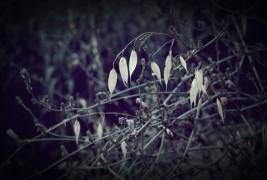 Clorinda Pascale - thumbnail_3