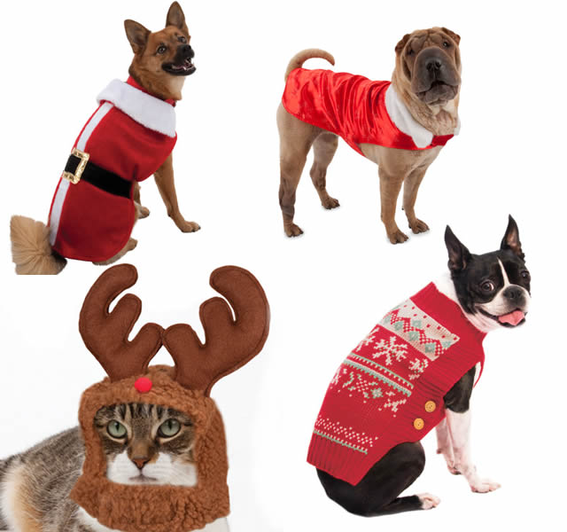 Top 10 gifts for your pets - Photo 8