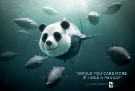 WWF Bluefin Tuna overfishing - thumbnail_1