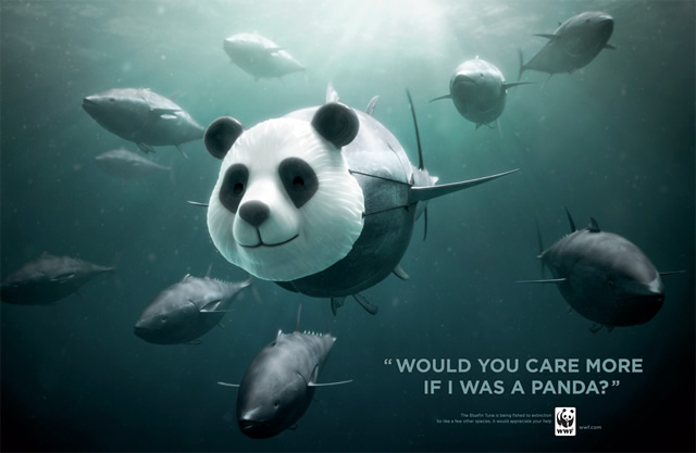 WWF Bluefin Tuna overfishing