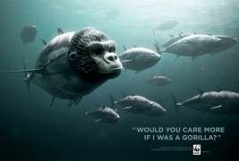 WWF Bluefin Tuna overfishing - thumbnail_2