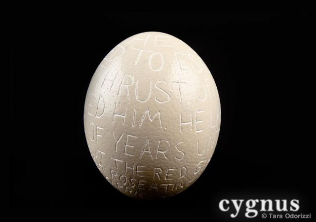 Cygnus experimental typography