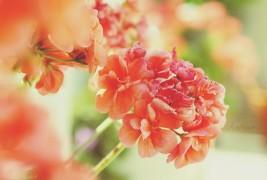 Amely Photography - thumbnail_8