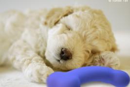 WithMe Bone dog toy - thumbnail_1