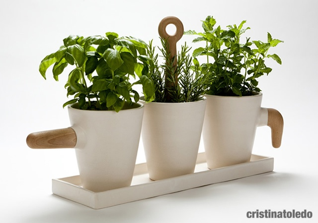 Kitchen herb in pot | Image courtesy of Cristina Toledo