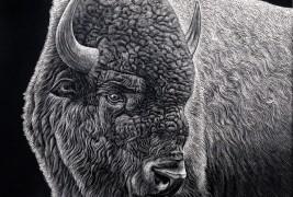 Buffalo Study
