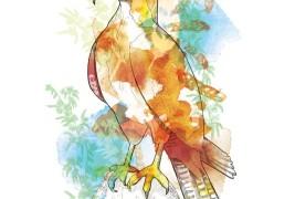 Illustrazioni by Willa Gebbie - thumbnail_7