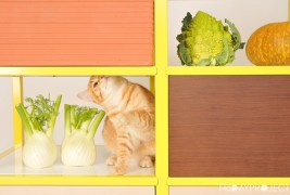 Food Storage by FridayProject - thumbnail_4
