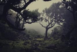 Il lavoro di Nuno Andrade - thumbnail_8