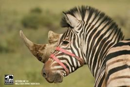 Save the Rhino - thumbnail_1