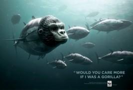 WWF Bluefin Tuna overfishing - thumbnail_2