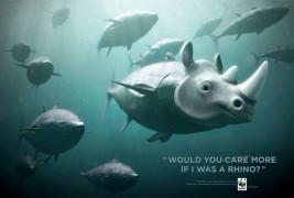 WWF Bluefin Tuna overfishing - thumbnail_3