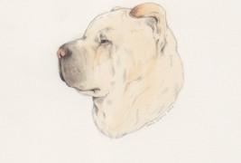 Drawings by Sarah McNeil - thumbnail_9