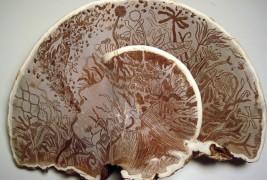 Funghi artistici - thumbnail_3