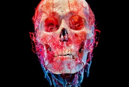 Bodies and Skulls - thumbnail_1