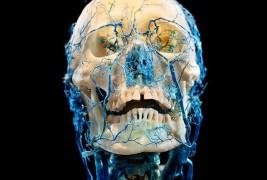 Bodies and Skulls - thumbnail_3